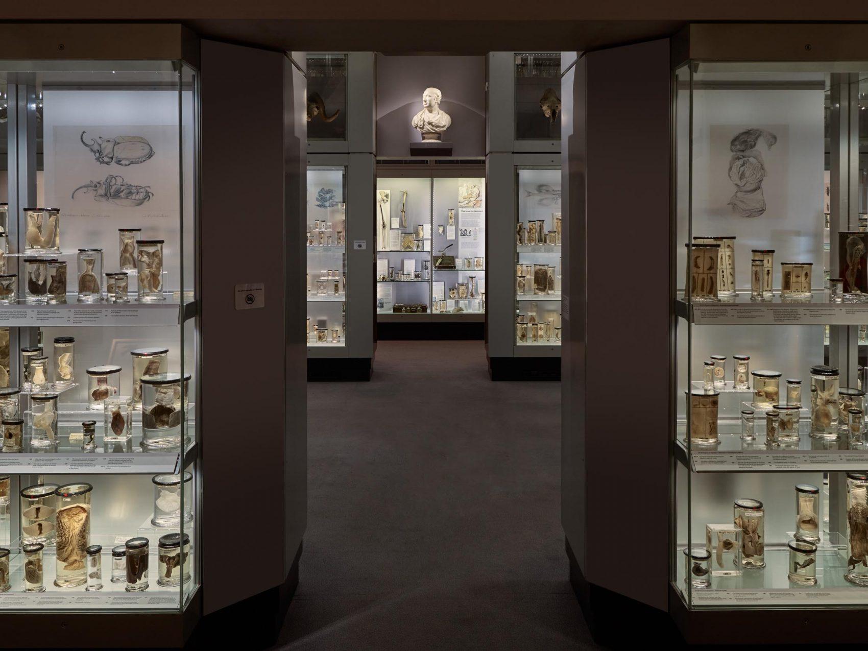 Obscure London Museums - Hunterian