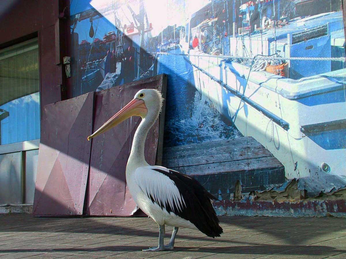 fish-market-sydney-travel