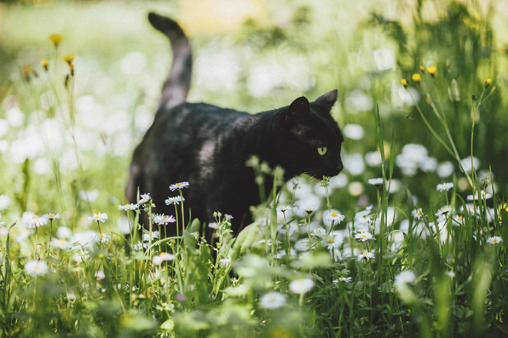 travel-photographer-elena-cat