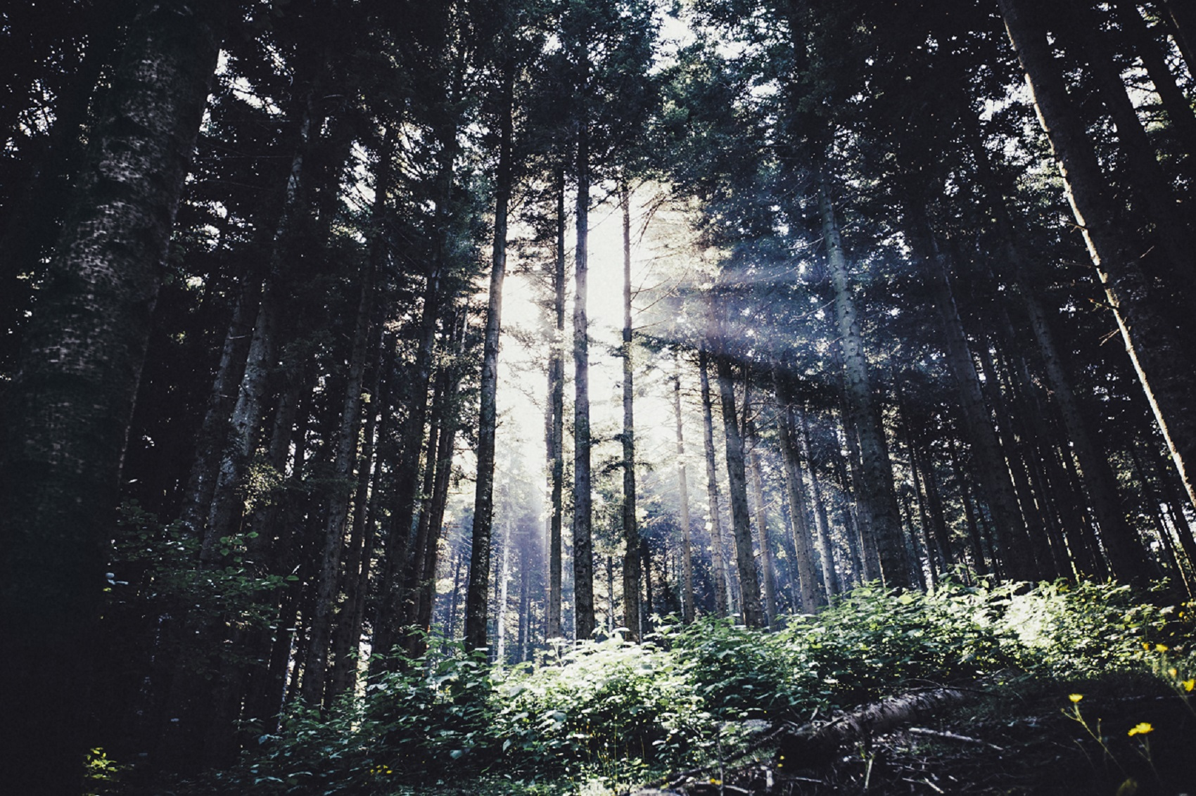 travel-photographer-wander-woods-elena