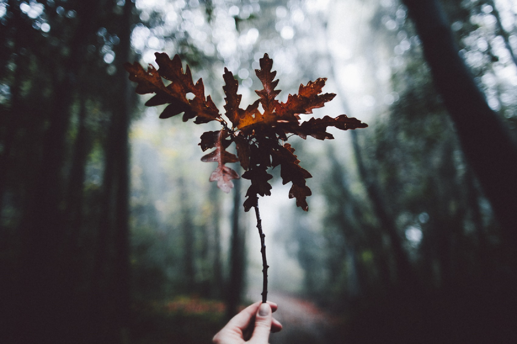 forest-wanderlust-travel-photographer