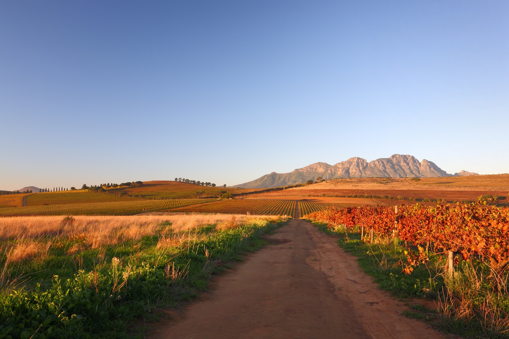 things-to-do-south-africa-vineyard