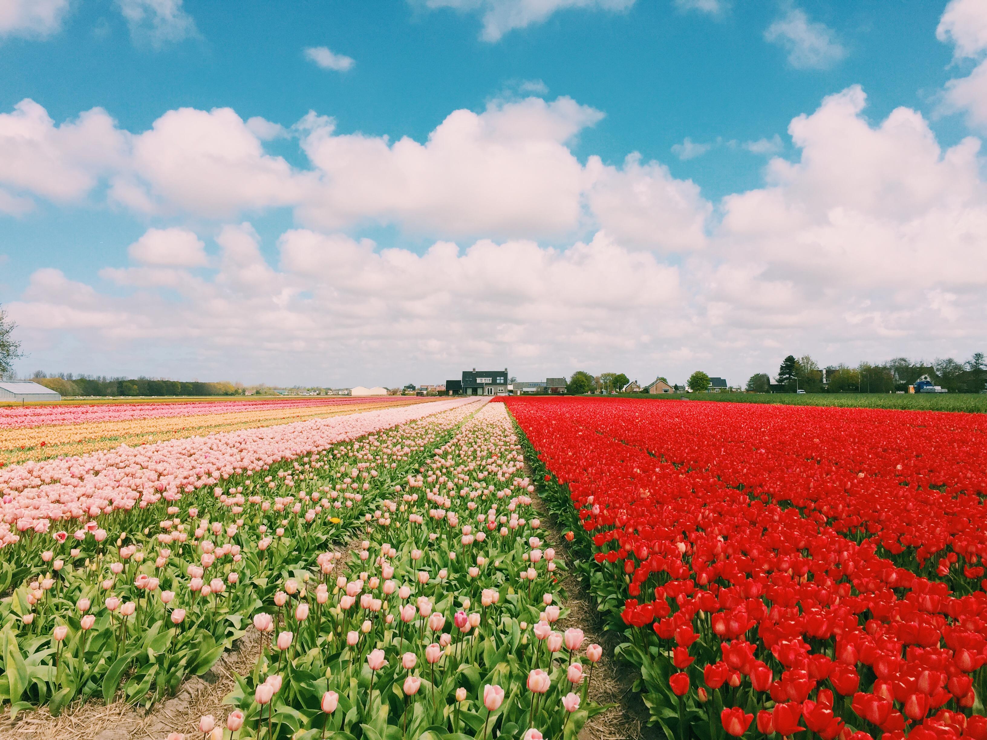 keukenhof-floral-springtime