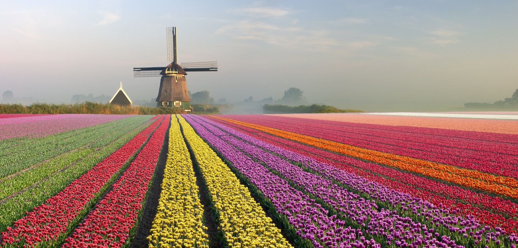 iconic-tulip-fields