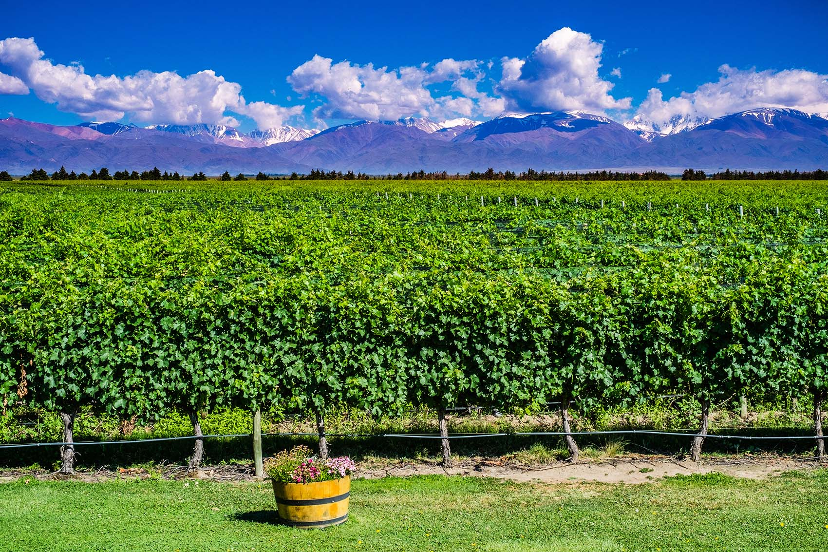 workaway-in-a-vineyard
