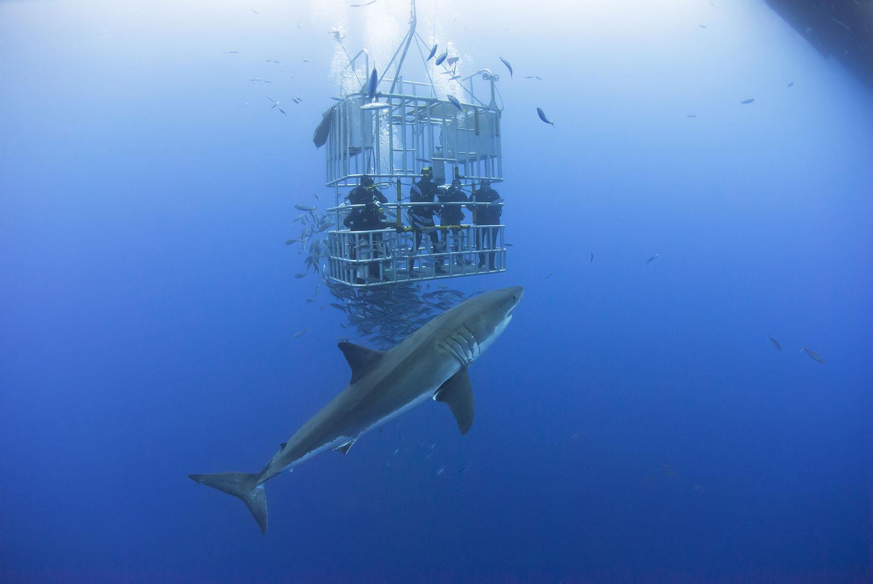 selfie-with-shark