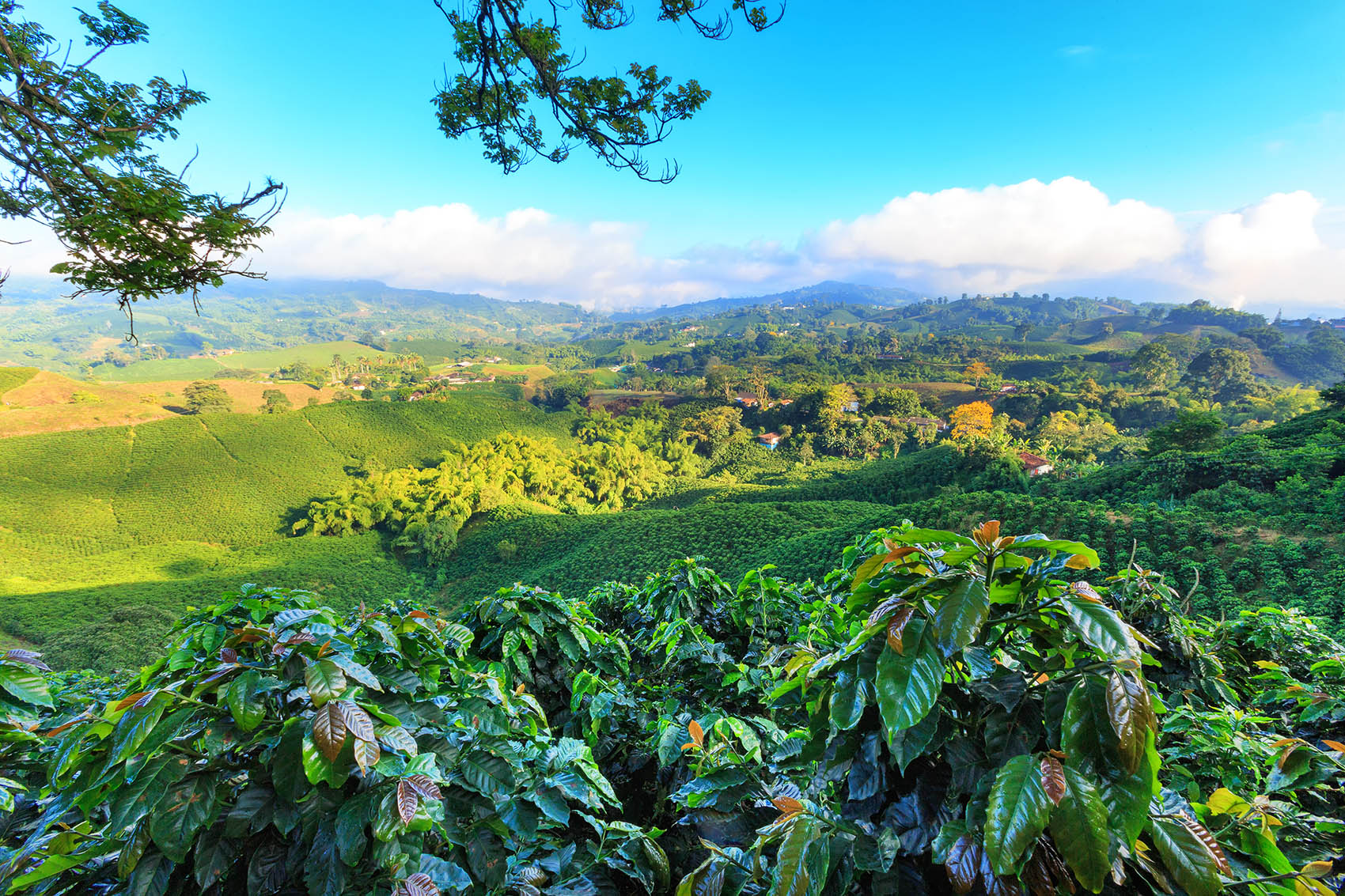 columbia-coffee