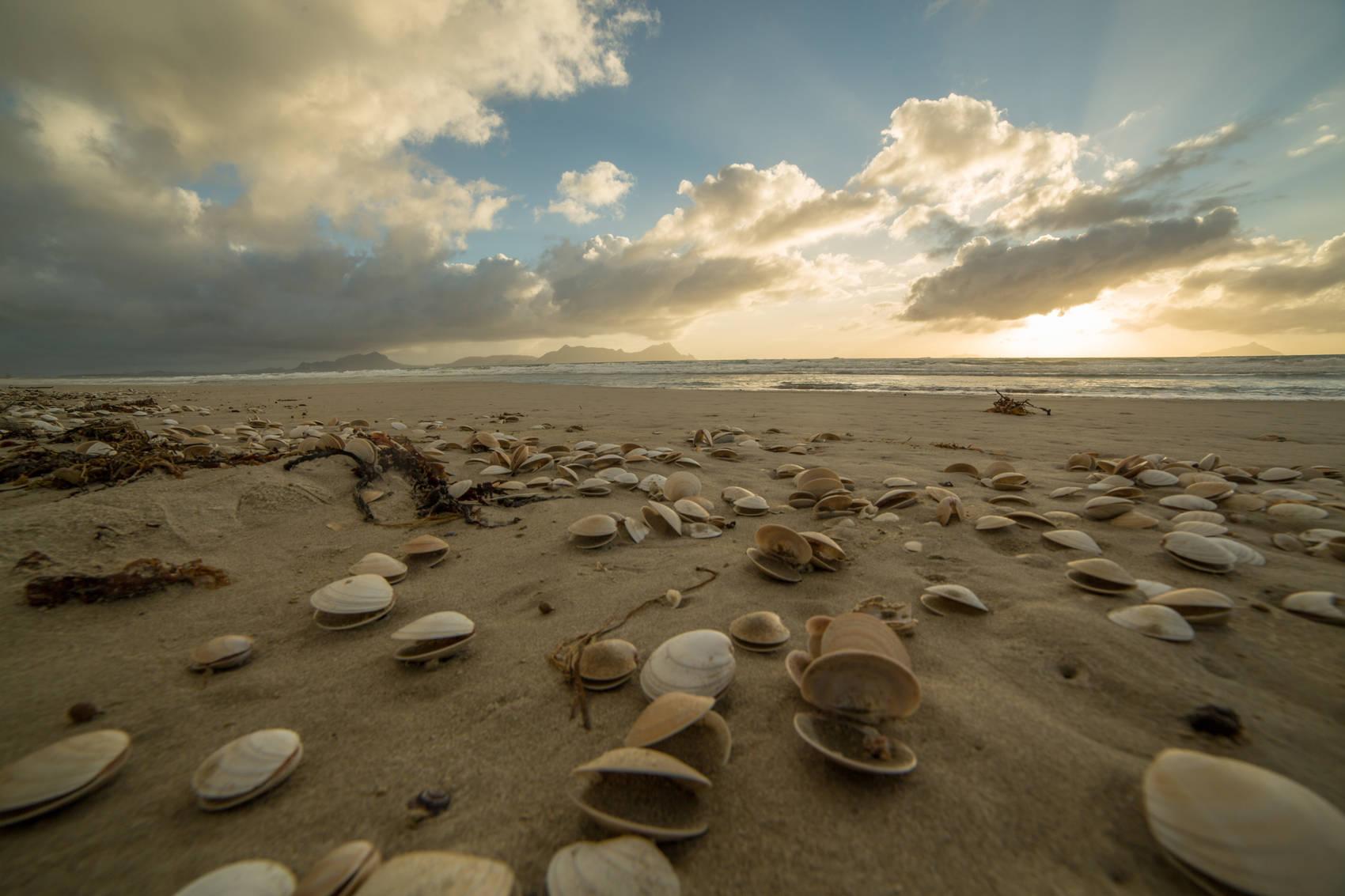 western-australia-shell-beach