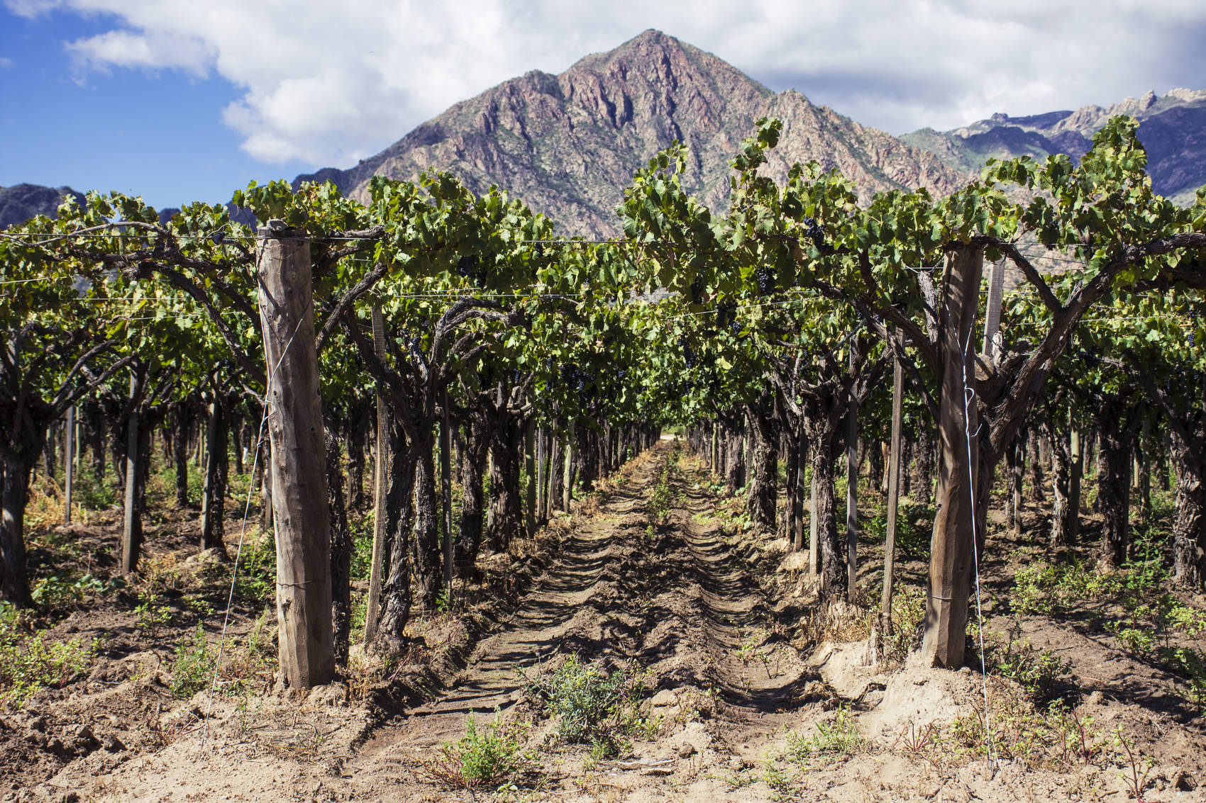 wine-regions-argentina