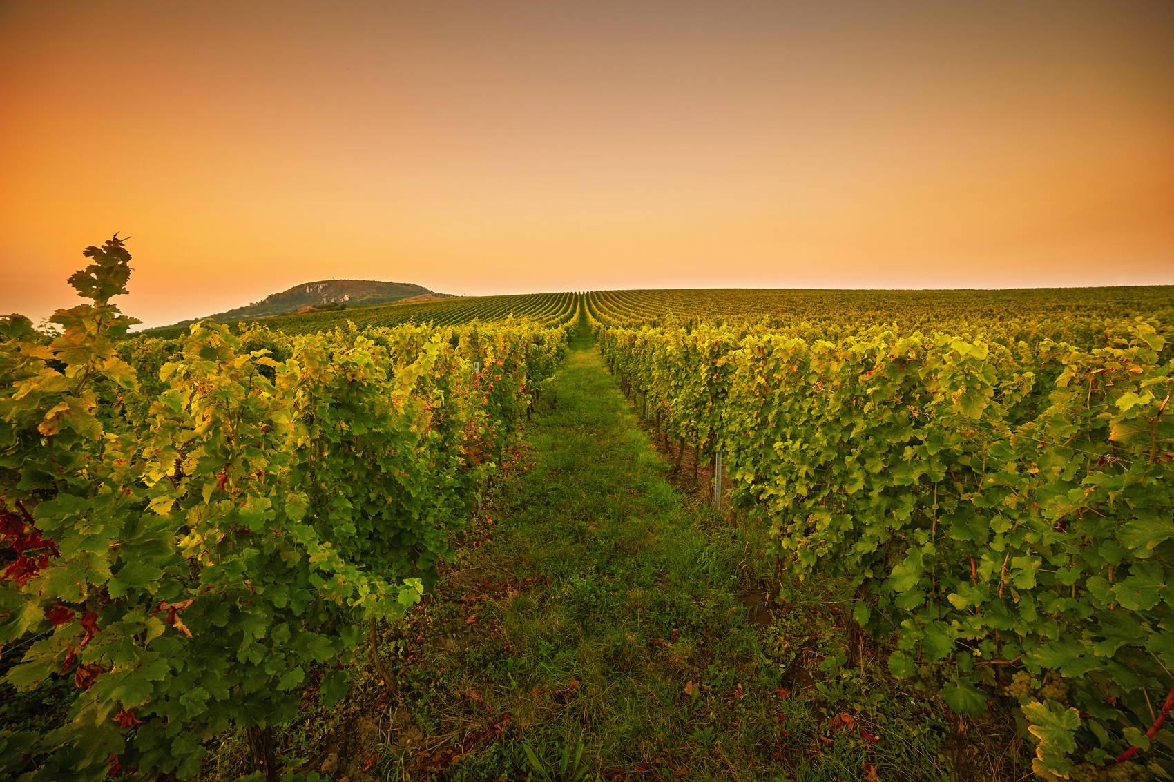wine-regions-tamar-valley