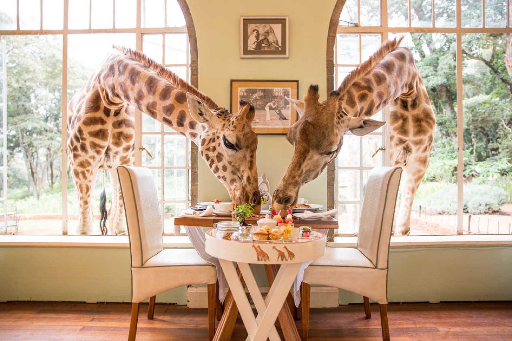 Desayuno-con-jirafa
