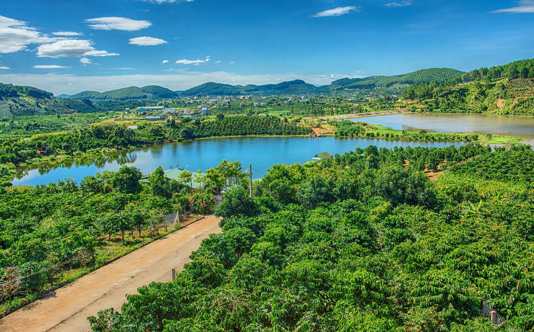 tea-plantation-Vietnam
