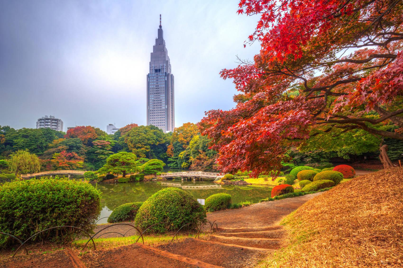 tokyo_park_autumn