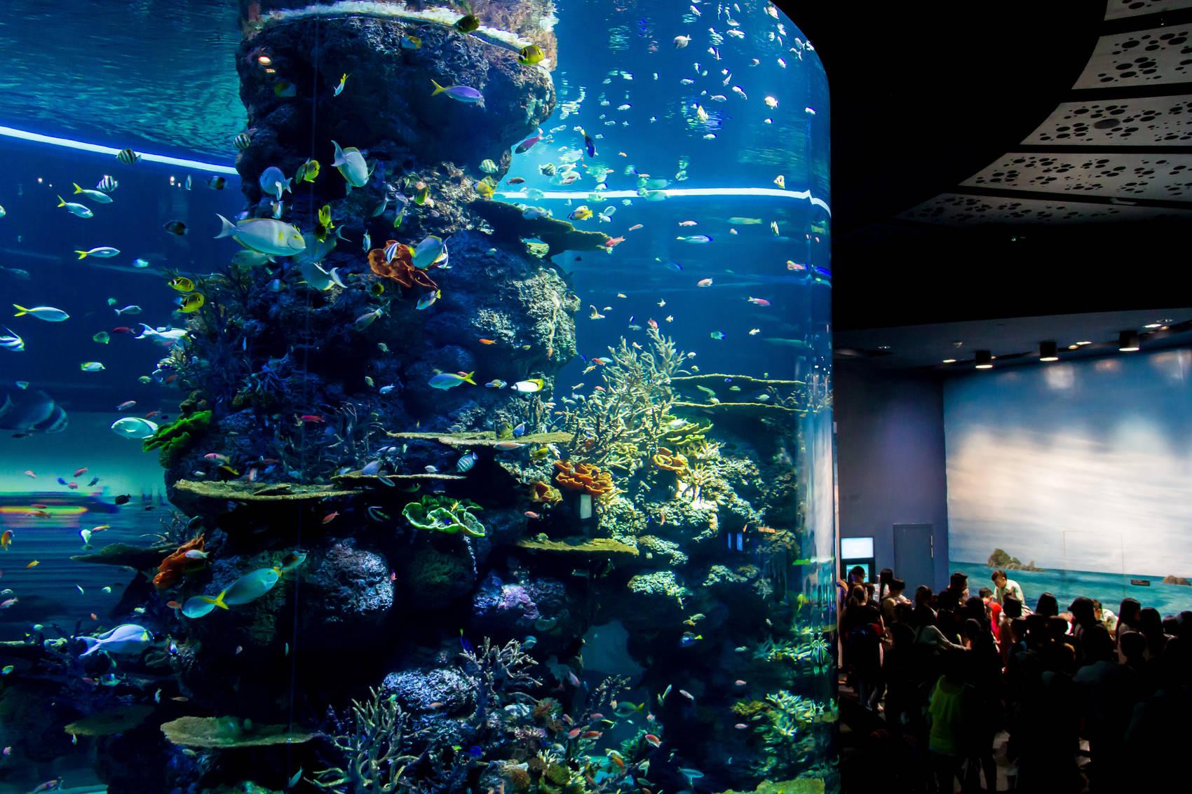 Christmas-in-Singapore-aquarium