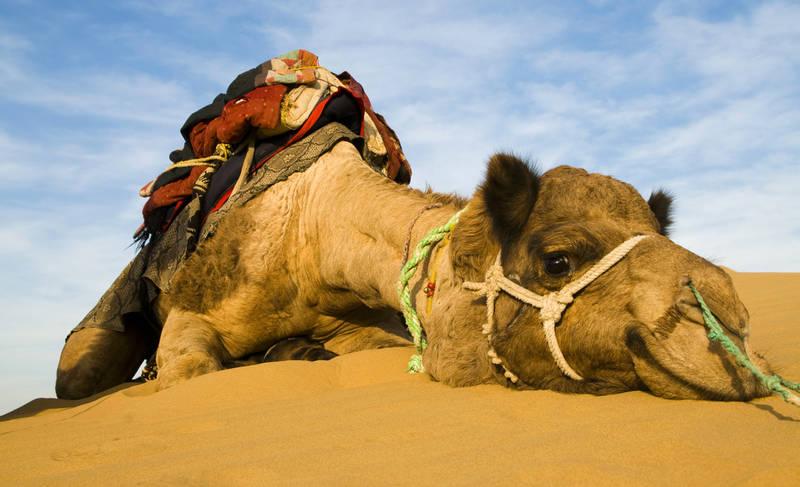 2018-travel-trends-saudi-arabia