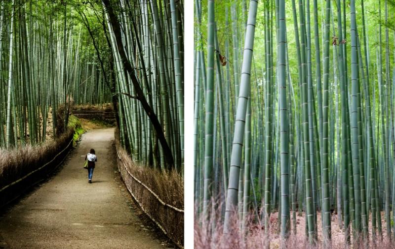 experiencias-de-viaje-inusuales-bosque-de-bambú