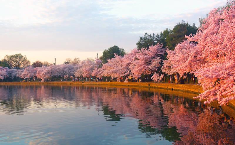 spring-2018-washington-d.c.-national-cherry-blossom-festival