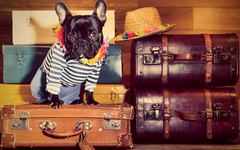 2018-travel-trends-pet-friendly-accomodations