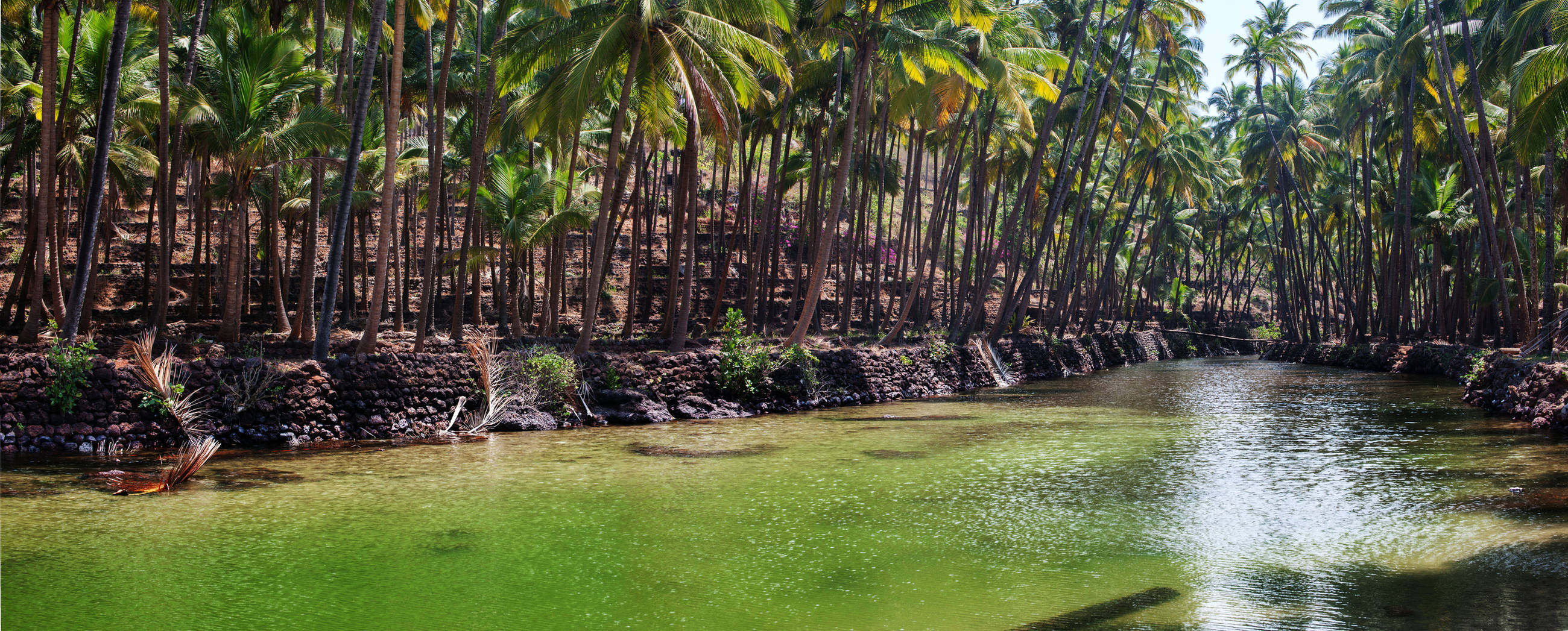 expat-guide-goa-river