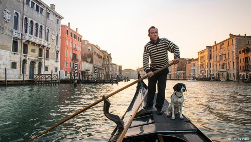travel image venice dogs facts