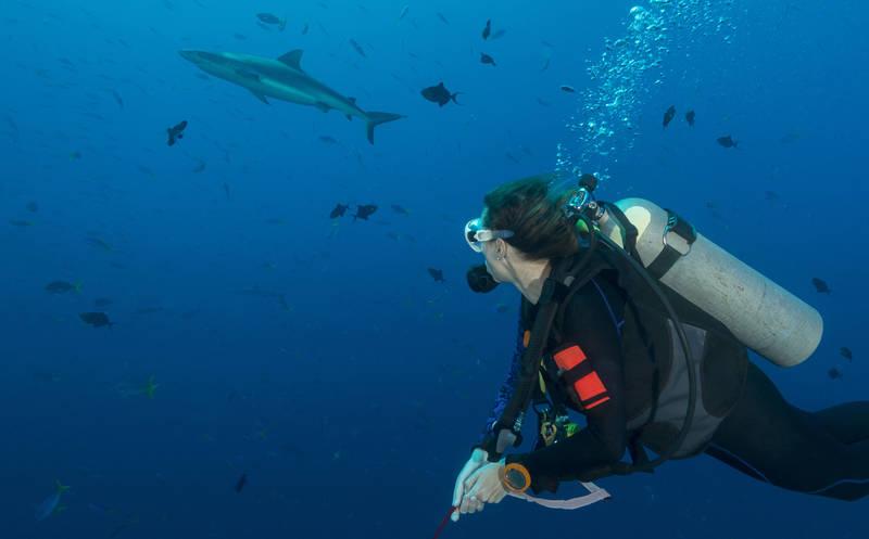 dive-best reefs in the world-blue corner-palau