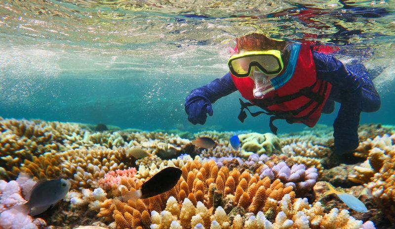 dive-best reefs in the world-great-barrier-reef