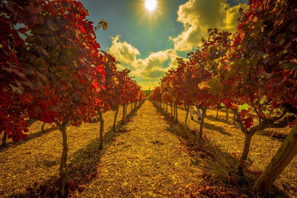 regiones-vinícolas-de-Turquía