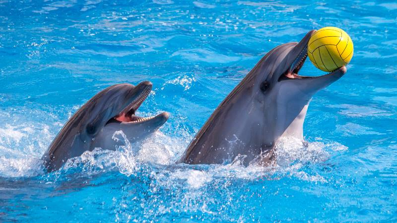 What to do in Dubai-dolphins