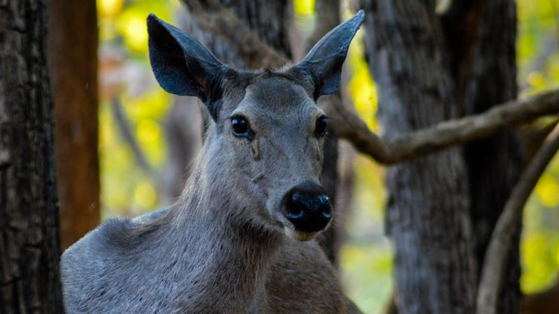 wildlife-photography-advice