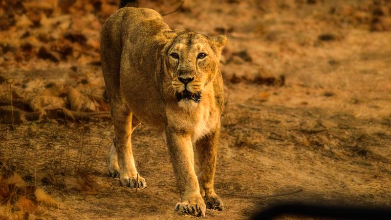 Wildlife-photography-Gir-forests