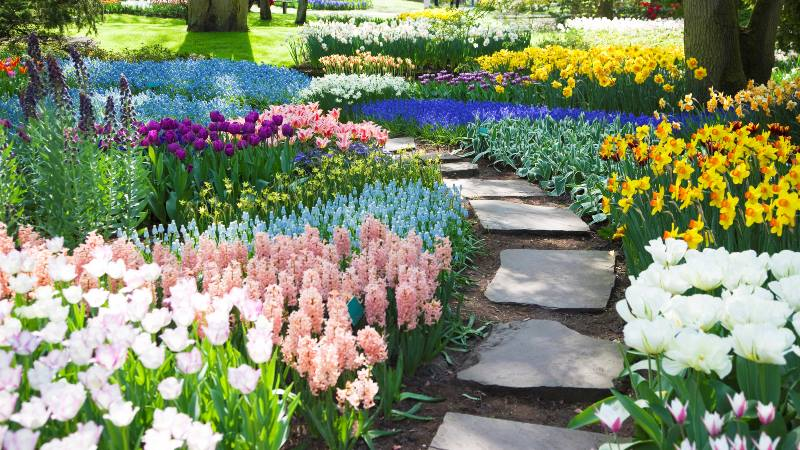 tulips-of-Keukenhof