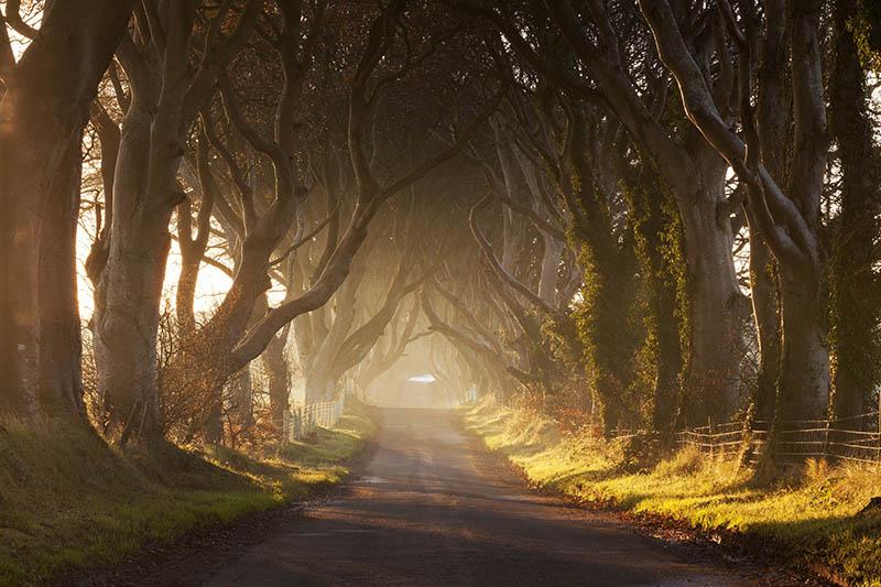 dark-hedges-north-ireland