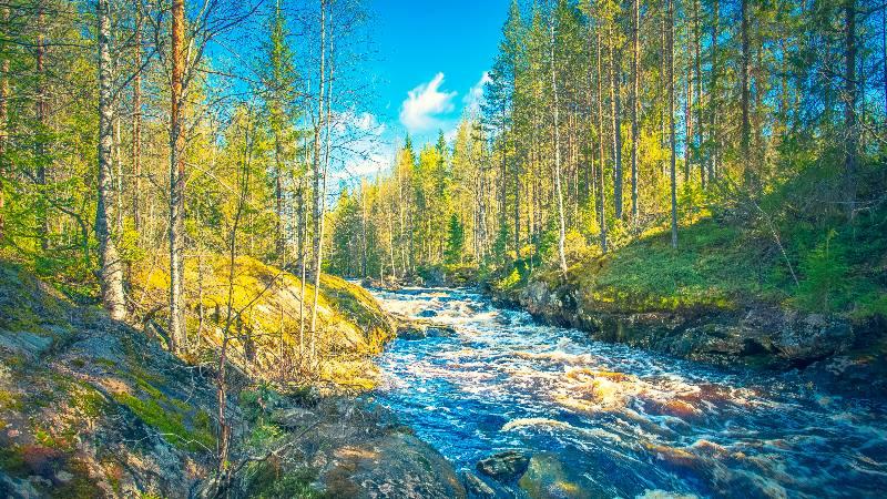 Lapland-Spring
