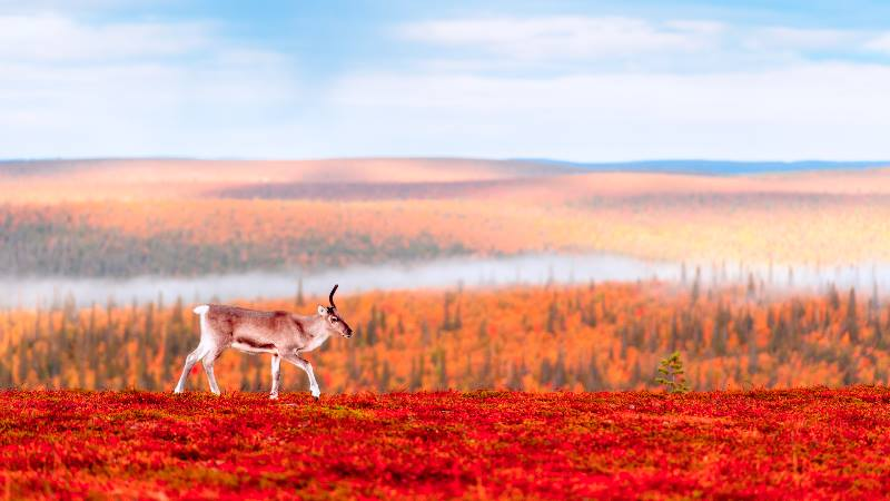 Lapland-Autumn
