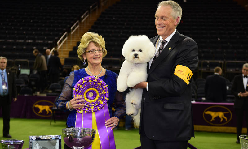 best-winter events in new york-westminster-dog-show