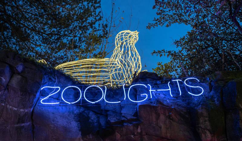 best-winter events in washington, d.c.-zoolights