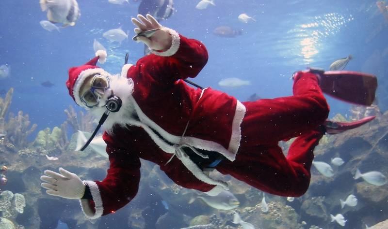 top-winter events in los angeles-aquarium-holidays