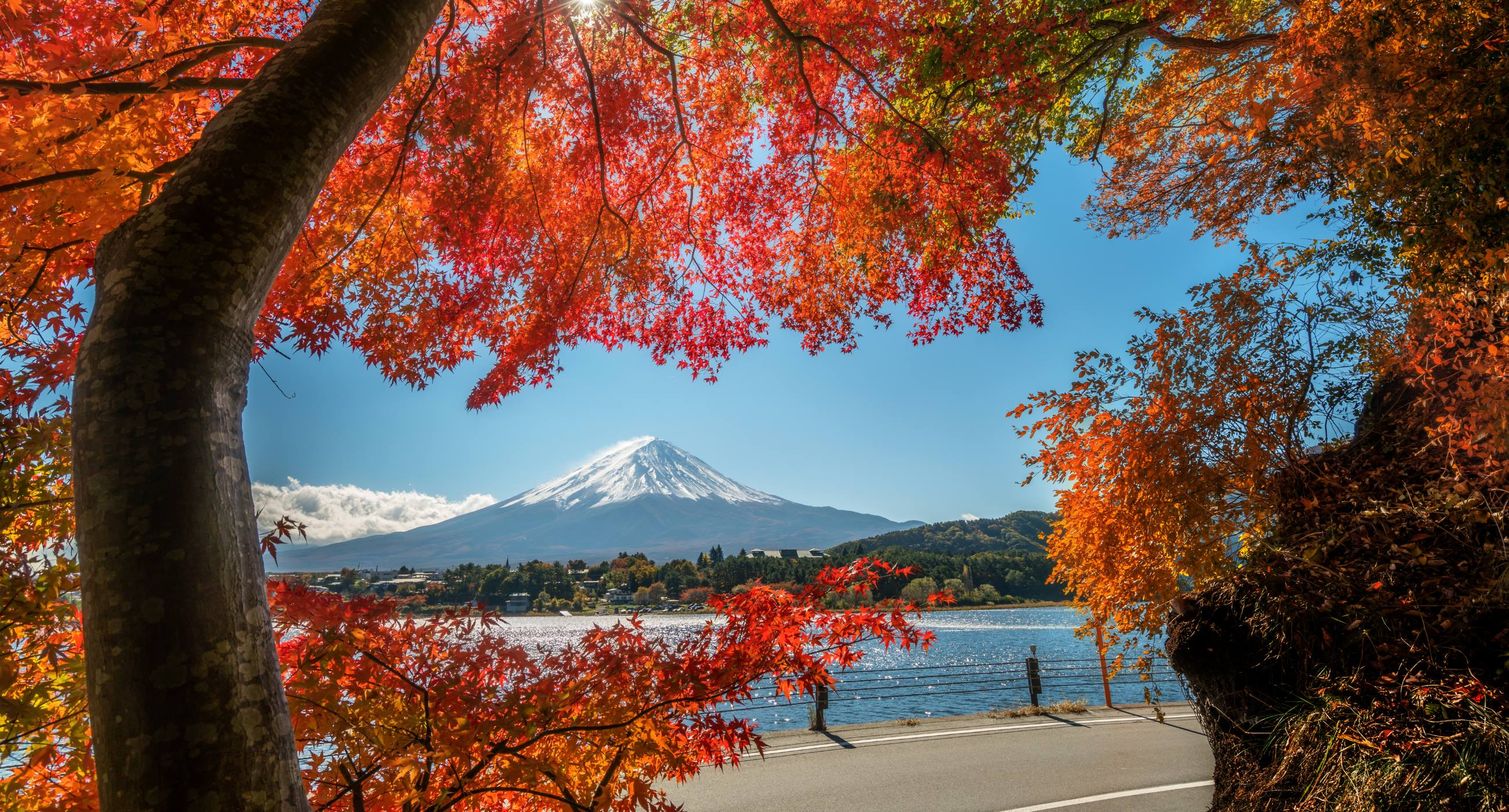 Autumn-in-Japan–Seeking-Out-Tokyo's-Colours