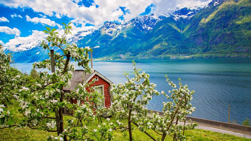 View-over-a-ffjord-in-Bergen-with-spring-blossoms-in-the-trees