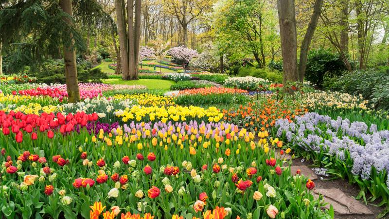 colourful-tulips-flowerbeds-and-path-in-an-spring-formal-garden-a-day-at-keukenhof
