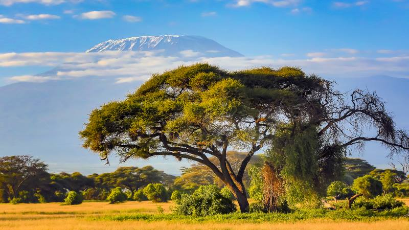 View-of-Kilimanjaro-with-trees-in-the-foreground-mountains-to-climb