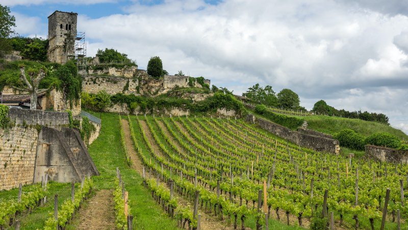 Vineyards near Bordeaux  with old church building in the background