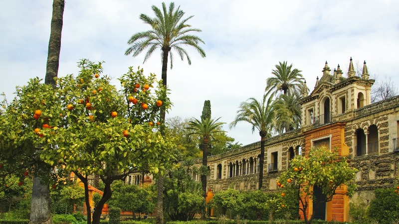 Seville and orange trees