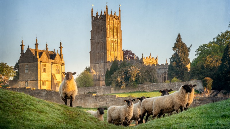 View of sheep in a Cotswold town near Startford Upon Avon